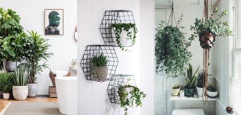 COTTO | Bathroom Inspiration on aloe plant in bathroom, air plants in bathroom, prayer plant in bathroom,